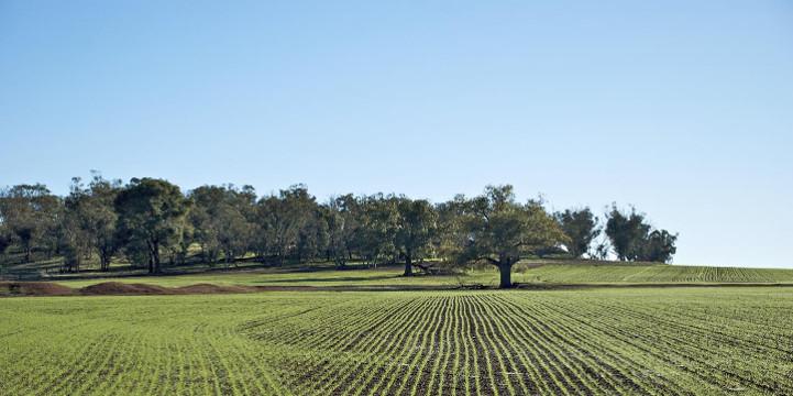 Agricoltura, biologica e siciliana. Il futuro parte da qui