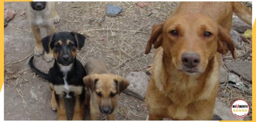 Giù le mani dai cani del canile di Palermo