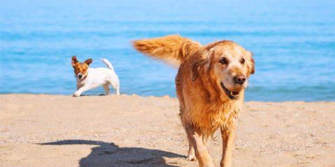 Spiaggia per cani a Palermo: Si metta a disposizione una zona balneabile